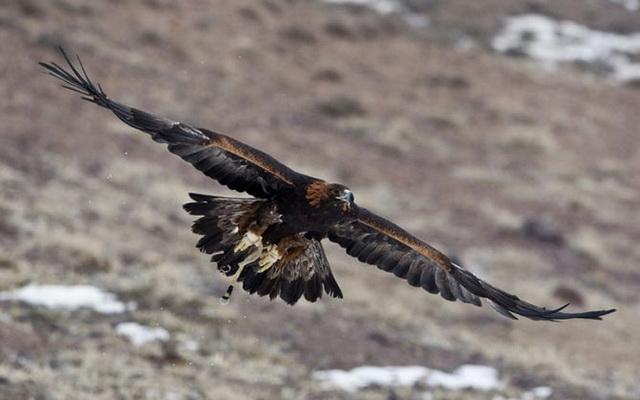 Охота с беркутом в Казахстане