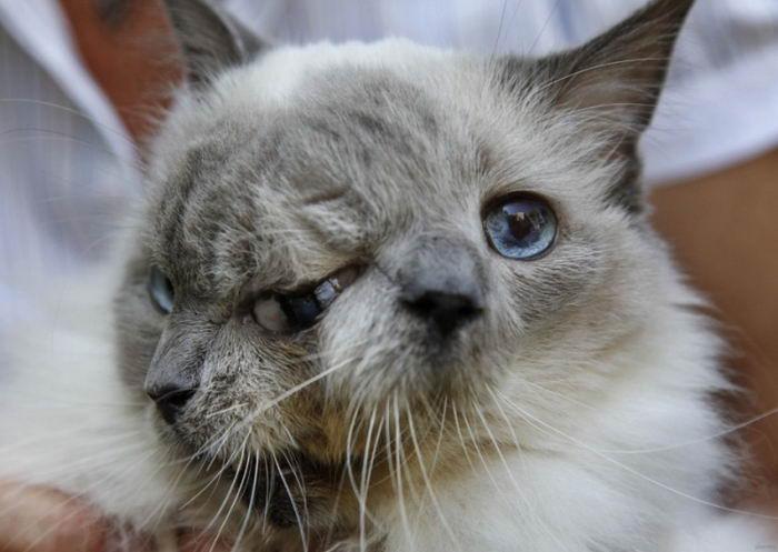 Кот с двумя лицами